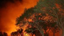 Se quemaron 1200 hectáreas en Jagüel del Monte