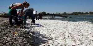 Otra vez miles de peces muertos en la laguna Don Tomás