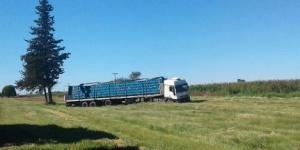 Un camión giró en la ruta 5 y tiró 250 cervezas