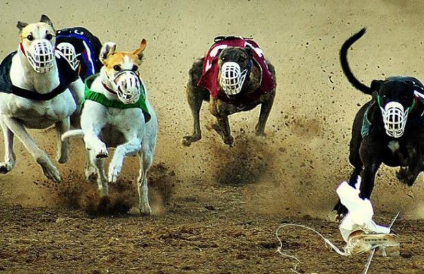 """La ley está """"mal redactada"""" y en La Pampa están habilitadas las carreras de galgos"""