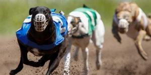 Promulgaron la ley que prohíbe las carreras de perros
