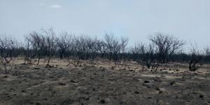 Un respiro: ya no quedan incendios rurales