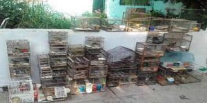 Fauna secuestró 100 aves en la provincia